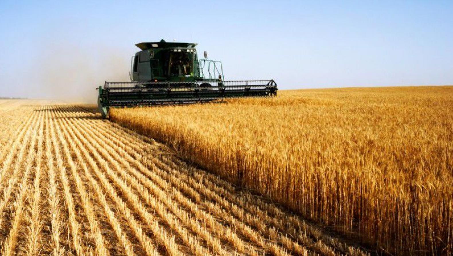 المثنى تحقق رقماً قياسياً في محصولي الحنطة والشعير